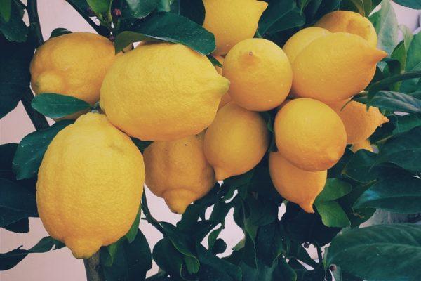 9 dingen die je vast nog niet wist over citroenen | Citroenen zijn cool!