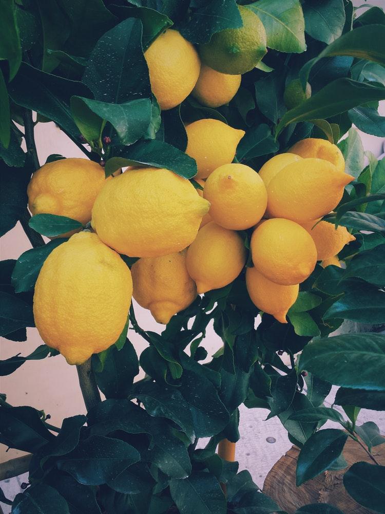 Citroenen zijn cool: wat je nog niet wist over citroenen