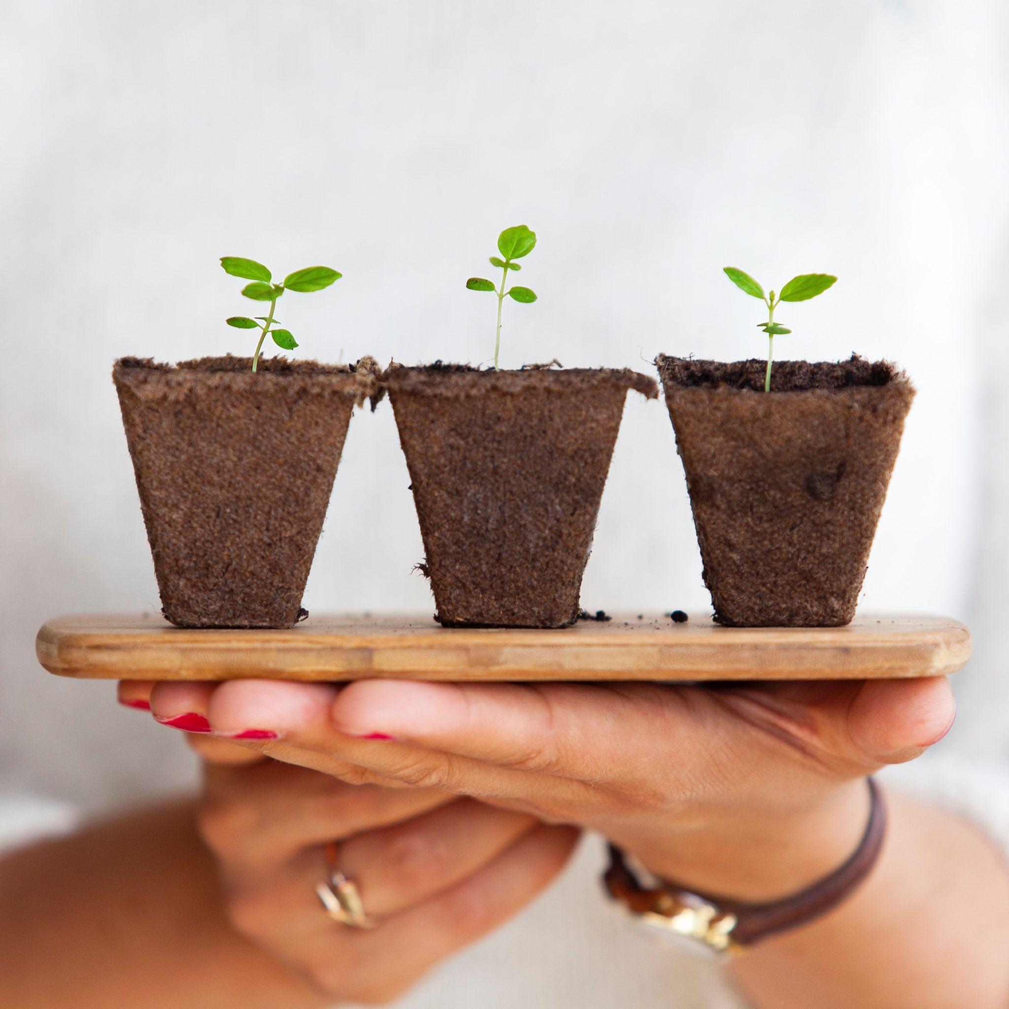 Groen in huis kun je natuurlijk ook gewoon zelf kweken!